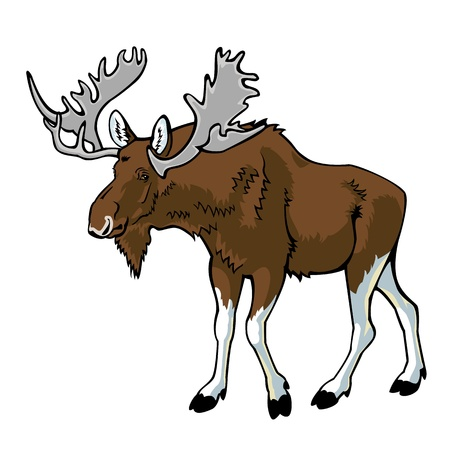 hoofed mammal: moose