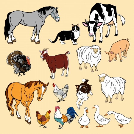 draught: vector set of most popular farm animals,isolated pictures