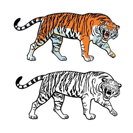panthera: Tigre siberiana, immagine vettoriale isolato su sfondo bianco Vettoriali