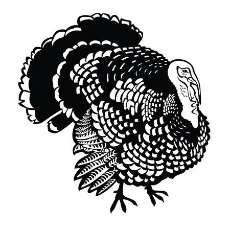 pavo, imagen en blanco y negro vectorial aislados en fondo blanco, imagen Vista lateral de pie