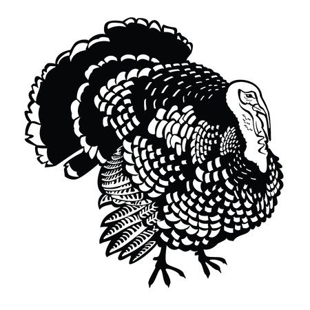 fowls: standing turkey,black and white vector picture isolated on white background,side view image