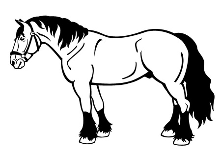 standing draft horse,black and white vector image isolated on white background,side view picture