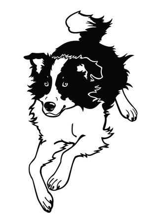 rinnande hund, border collie, svart och vitt vektor isolerade på vit bakgrund