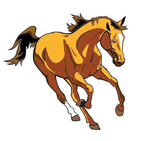 rinnande brun häst, isolared enda vektor bild på vit bakgrund, galopperande hingst