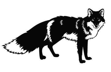 fox: standing fox,Eurasia forest beast,black and white vector image isolated on white background Illustration