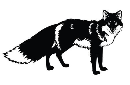 black fox: standing fox,Eurasia forest beast,black and white vector image isolated on white background Illustration