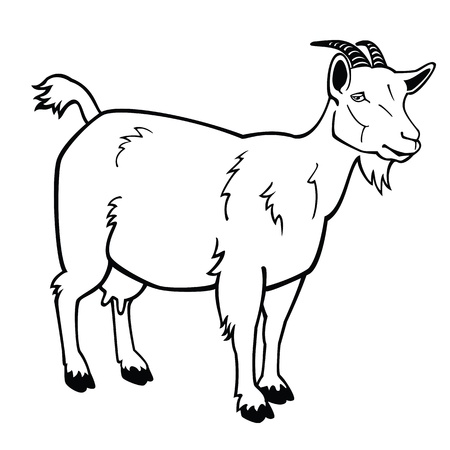 domestic goat: standing goat,black and white vector image,side view contour picture Illustration