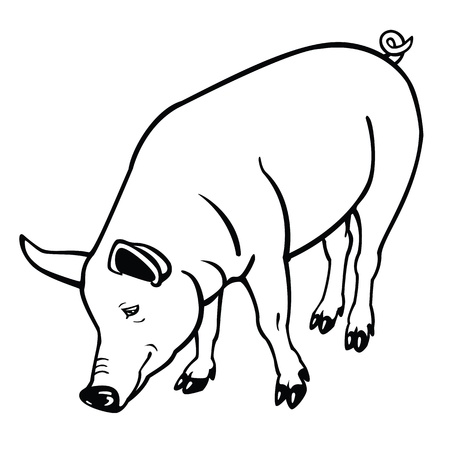 standing pig,black and white vector image,contour picture isolated on white background Illustration