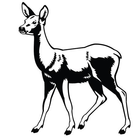 staande reeën, zwart-wit beeld, zijaanzicht vector afbeelding geïsoleerd op witte achtergrond, volle lengte, monochroom enkele bos dier