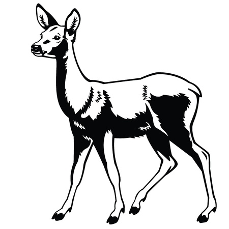 standing roe deer ,black and white image,side view vector picture isolated on white background,full length,monochrome single forest animal Vector