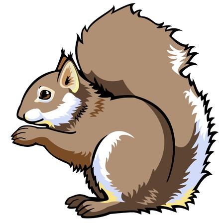ardilla: ardilla sentada, Sciurus vulgaris, vista lateral imagen vectorial aislados en fondo blanco, animal bosque único
