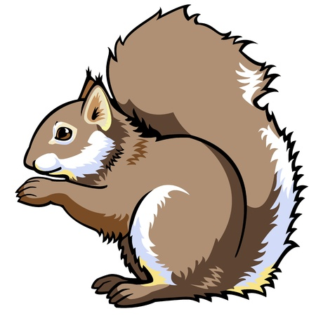 sitting squirrel,sciurus vulgaris,side view vector picture isolated on white background,single forest animal