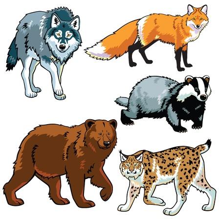 zorro: conjunto de los depredadores, fotos animales salvajes, bestias del bosque, imágenes aisladas sobre fondo blanco Vectores