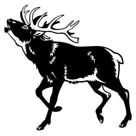 kronhjort, hjort, rådjur, svartvit bild, från sidan bild isolerad på vit bakgrund Illustration