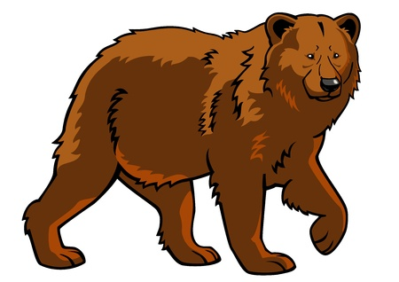 arctos: orso, l'orso bruno, Ursus arctos, immagine, vista laterale immagine isolato su sfondo bianco, lunghezza