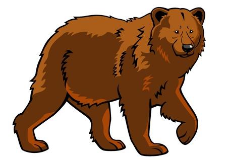 oso blanco: oso, oso pardo, Ursus arctos, imagen, imagen vista lateral aislado en el fondo blanco, de cuerpo entero Vectores