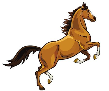 жеребец: Лошадь, воспитания, изображение, изолированных на белом фоне, коричневого жеребца картину Иллюстрация