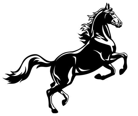 순 혈종의: 블랙 stalion, 문신 그림을 양육, 흰색 배경에 고립 된 말, 뒤, 흑백 사진