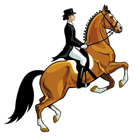 Reiter, Dressur, Pferdesport, auf wei�em Hintergrund, Seitenansicht Bild isoliert Illustration