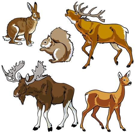 set van dieren, wilde dieren, bos fauna, vectorafbeeldingen geïsoleerd op witte achtergrond, Eurazië herbivoor zoogdieren Stock Illustratie