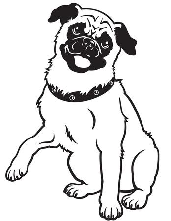mops, hund aveln, svart och vitt vektor bild isolerad på vit bakgrund, framifrån bild, sittande pose