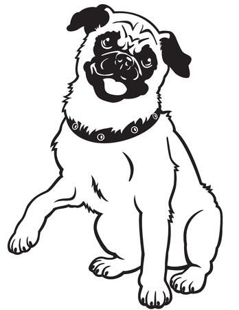 pug,dog breed,black and white vector picture isolated on white background,front view image,sitting pose