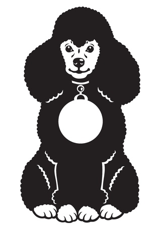 dog ,poodle breed,black and white vector picture,sitting pose,front view image Stock Vector - 16459133