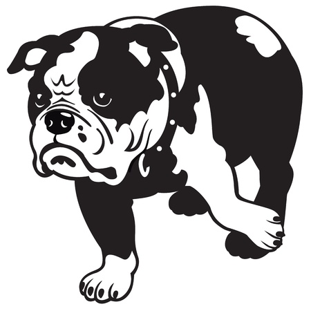 spotted dog: dog,english bulldog breed,black and white vector picture isolated on white background,front view image