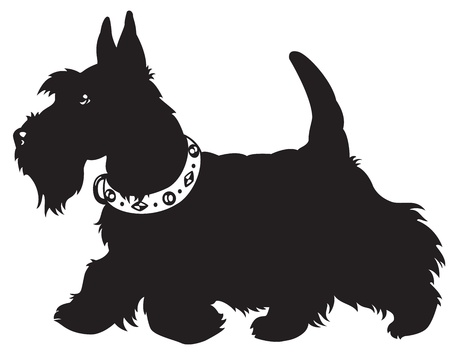 dog,scottish terrier,black and white  picture isolated on white background,side view image