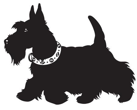 hond, schotse terriër, zwart-wit foto geïsoleerd op witte achtergrond, zijaanzicht beeld