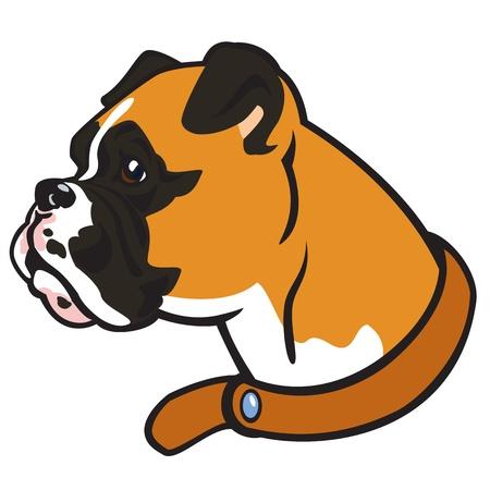 perro boxer: cabeza boxeador, raza del perro, imagen vectorial aislados en fondo blanco, el perfil de la imagen