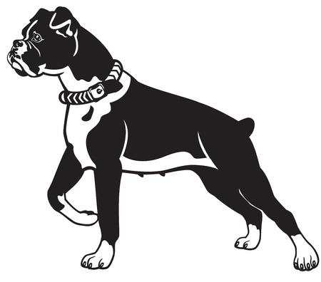 boksör: köpek ırkı boksör, siyah ve beyaz vektör resim, yan görünüm görüntü poz ayakta Çizim