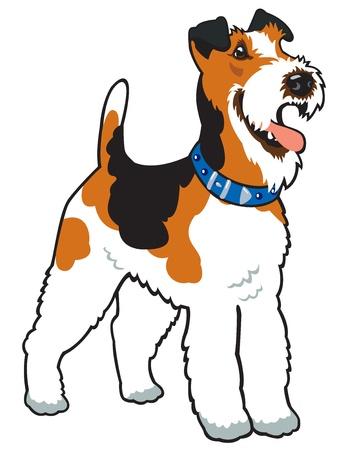 chien, race fox-terrier, photo vecteur isolé sur fond blanc, debout posent Illustration