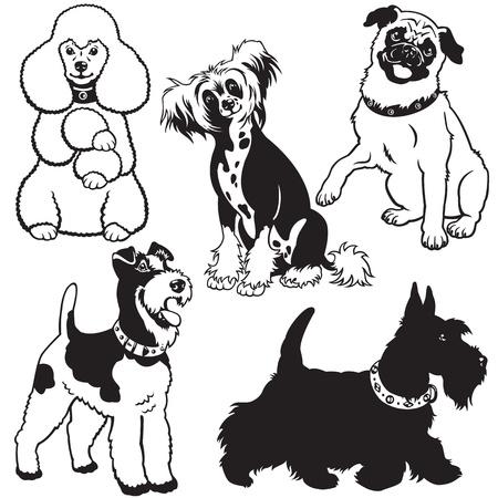 establecer con los perros, recolección vector con las razas pequeñas, fotos en blanco y negro sobre fondo blanco Ilustración de vector