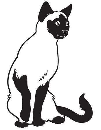 cat,siamese breed,black white vector picture isolated on white background,sitting pose,front view