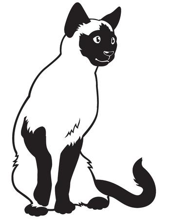 katt, siamese ras, svart vit vektor bild isolerad på vit bakgrund, sittande pose, framifrån Illustration