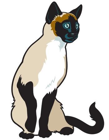 siamese: cat, siamese Rasse, vectorbild isoliert auf wei�em Hintergrund, sitzend Pose, Frontansicht