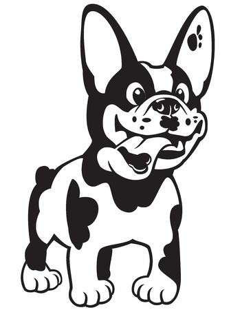 hond, cartoon franse bulldog, zwart wit beeld geïsoleerd op witte achtergrond