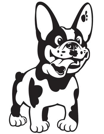 Hund, cartoon franz�sisch bulldogge, schwarz wei� Bild auf wei�em Hintergrund