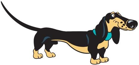 dog,dachshund breed,cartoon image,vector picture isolated on white background Illustration