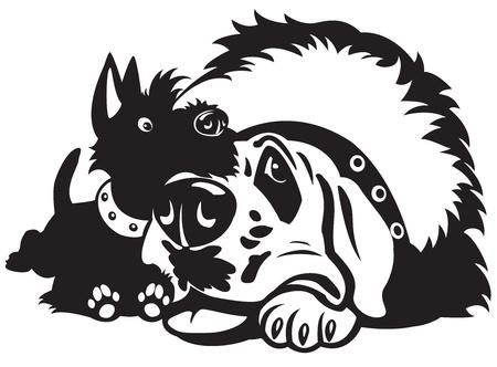 miniature breed: perros, scottish terrier y el santo bernard amistad, la imagen de dibujos animados en blanco y negro, imagen aislada en el fondo blanco