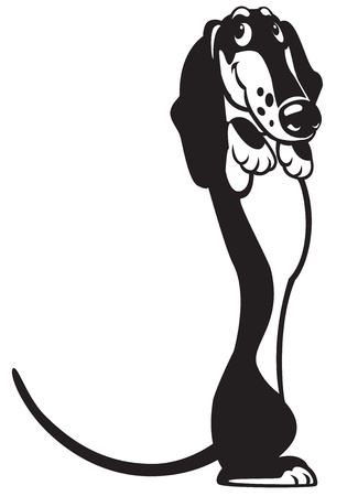 dachshund,cartoon dog,black white picture isolated on white background