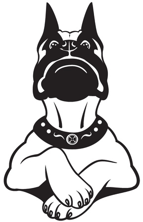 boxer dog: dog boxer breed,black white cartoon picture,front view vector image isolated on white background