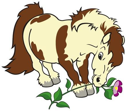 shetlander: paard, shetland pony met bloem, cartoon geïsoleerd op een witte achtergrond, kinderen illustratie, beeld voor kleine kinderen