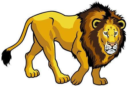 panthera: leone, Panthera leo, illustrazione vista laterale isolato su sfondo bianco