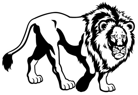 lion,black white side view picture isolated on white background Stock Vector - 17431105