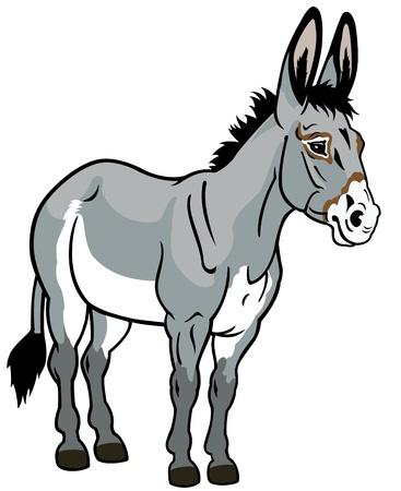 asno: burro, ilustraci�n vista frontal aislado sobre fondo blanco