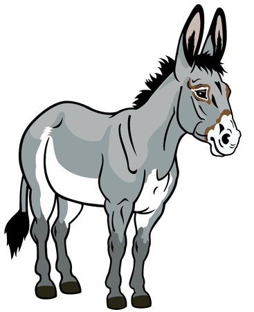 mule: donkey,front view illustration isolated on white background