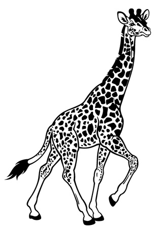 girafe: giraffe,afric animal,,black and white picture,side view illustration