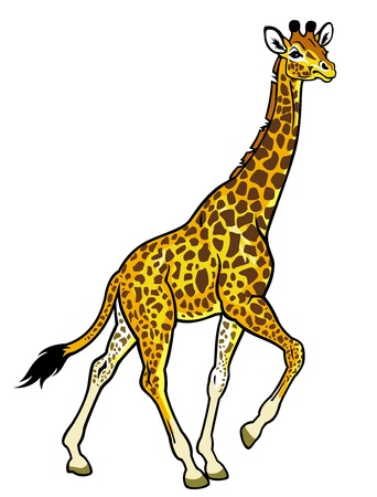 giraffe,africa animal,side view picture isolated on white background Stock Vector - 17624415